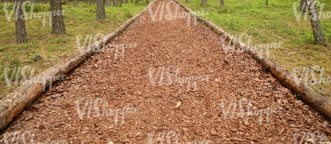 a forest pathway covered with mulch