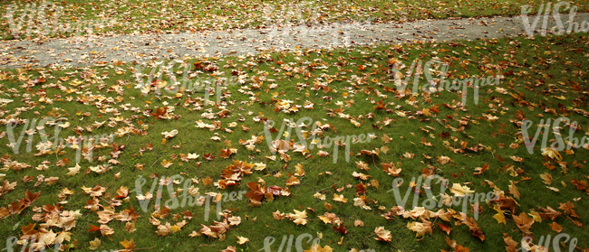 grass ground with a walkway and autumn leaves