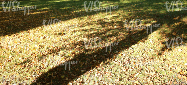 grass ground covered with autumn leaves