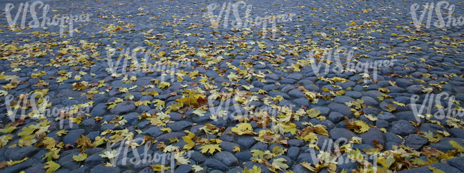 cobblestone ground with autumn leaves