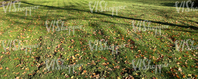 mown lawn with autumn leaves