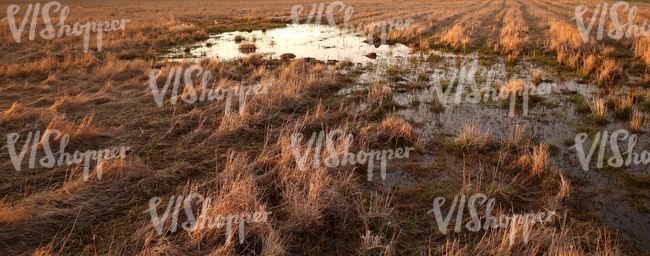 wet field in springtime at sunset
