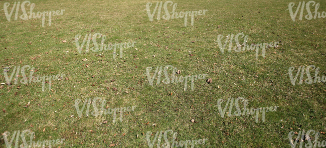grass ground with dry leaves