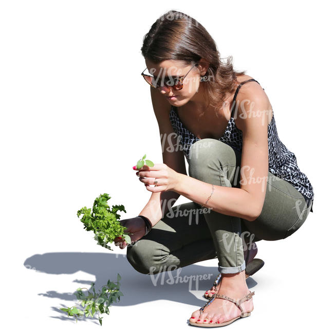 woman squatting and picking herbs