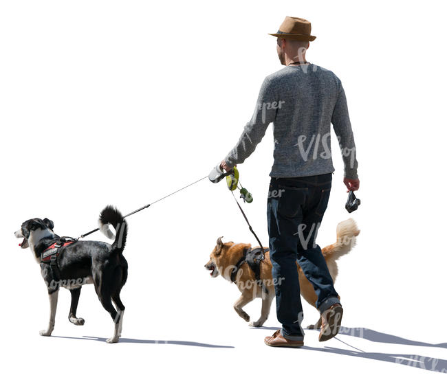 backlit man walking with two dogs