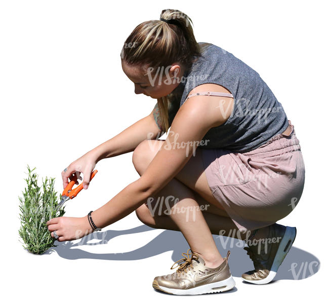 woman squatting and cutting herbs