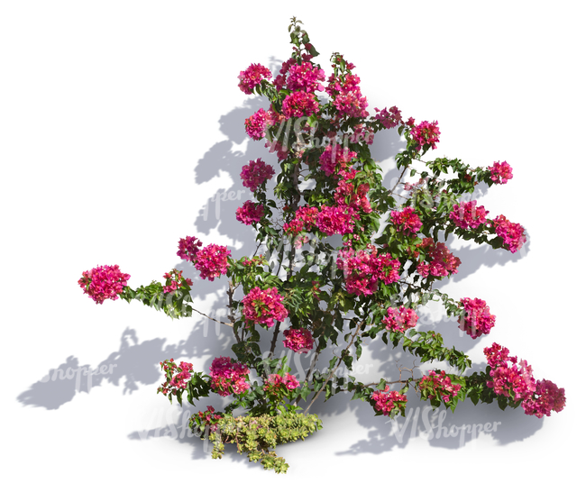 cut out climbing plant with pink blossoms - cut out trees and plants