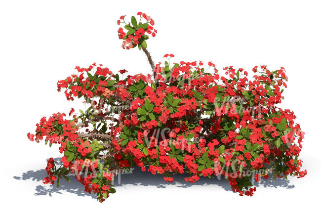 cut out small bush with red blossoms