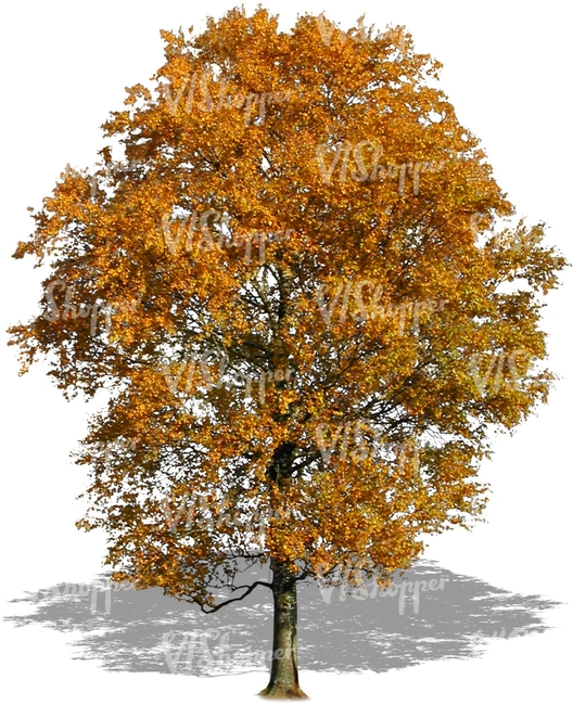 cut out big tree with golden leaves