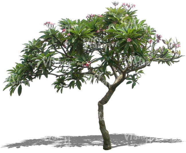 cut out tropical tree with pink blossoms   cut out plants