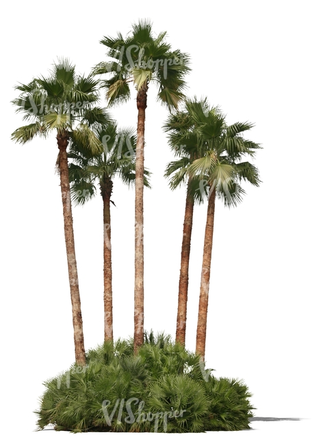 cut out group of palm trees