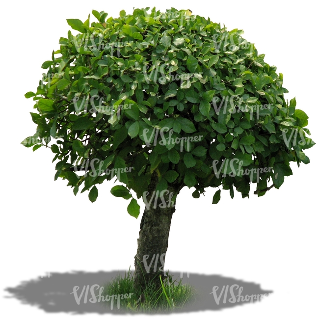 Cut out small round tree