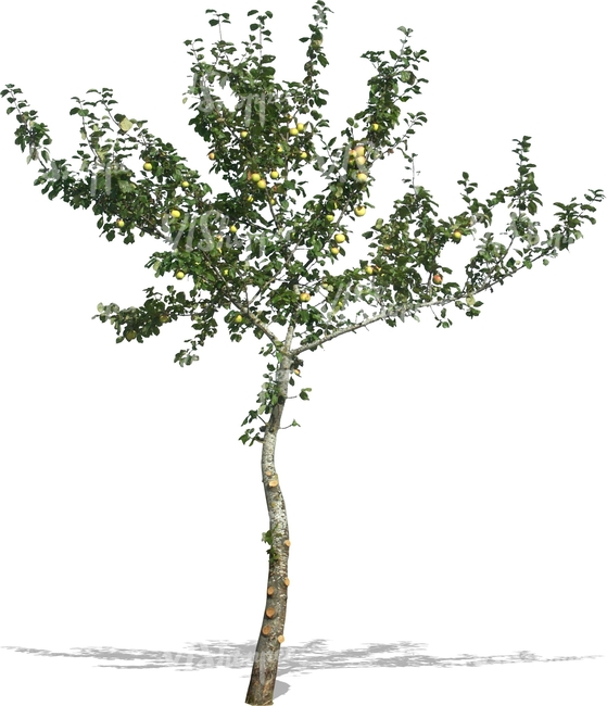 cut out small apple tree with apples