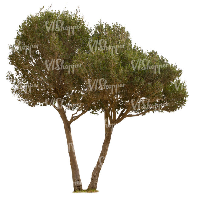 cut out mediterranean tree