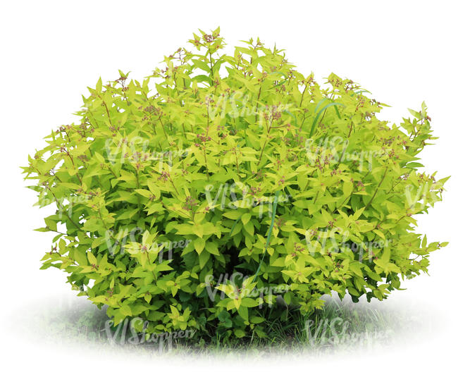 cut out light green bush