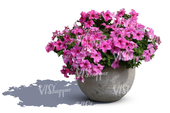 blooming flower in a stone pot