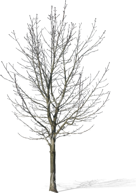 cut out bare tree