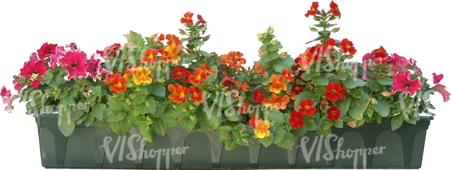cut out row of red flowers in a pot