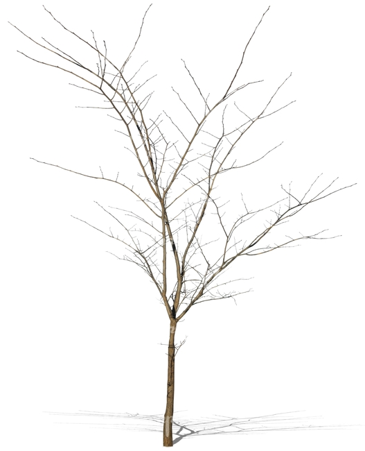 small leafless tree