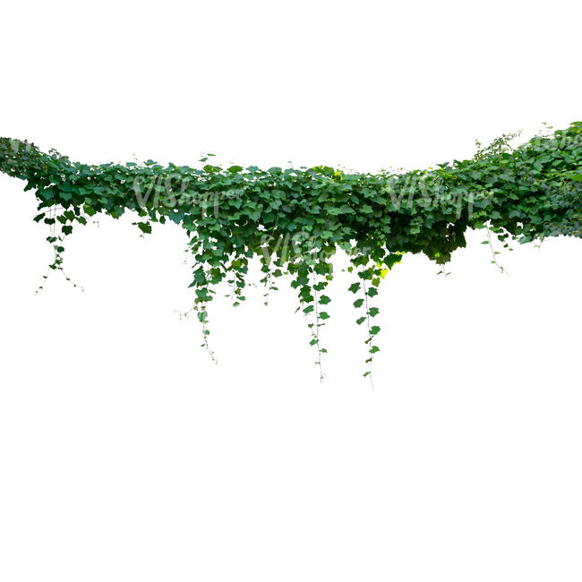 cut out hanging vine