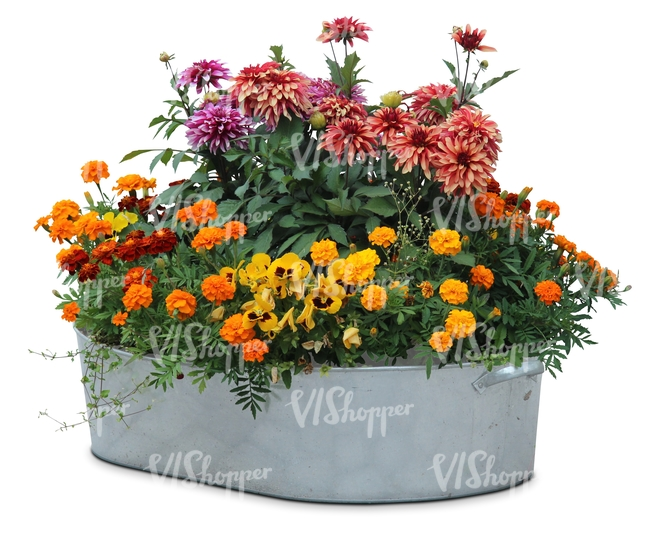 basin full of flowers