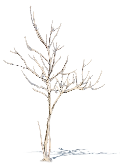 small leafless tree with snow