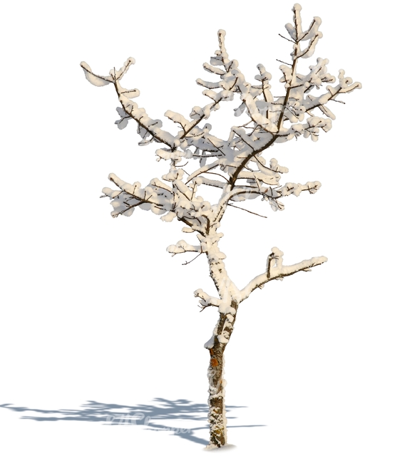 small leafless winter tree