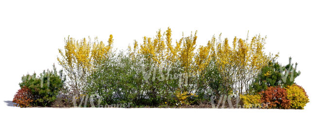 group of different blooming bushes
