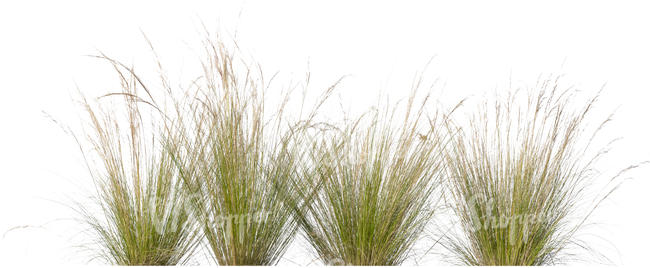 four tufts of grass