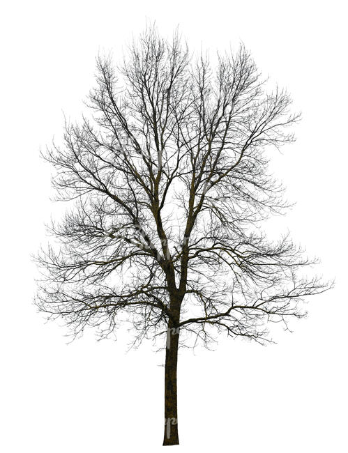 cut out bare leafless tree