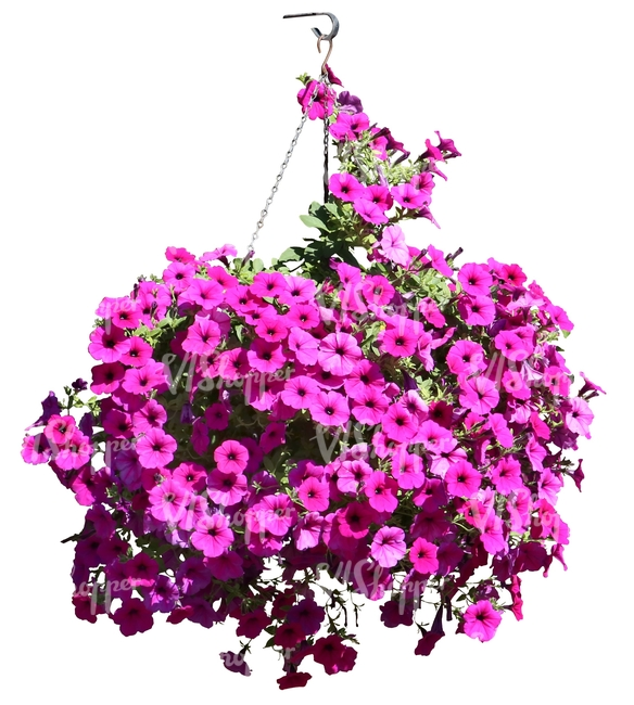 Hanging Basket With Pink Flowers Cut Out Trees And