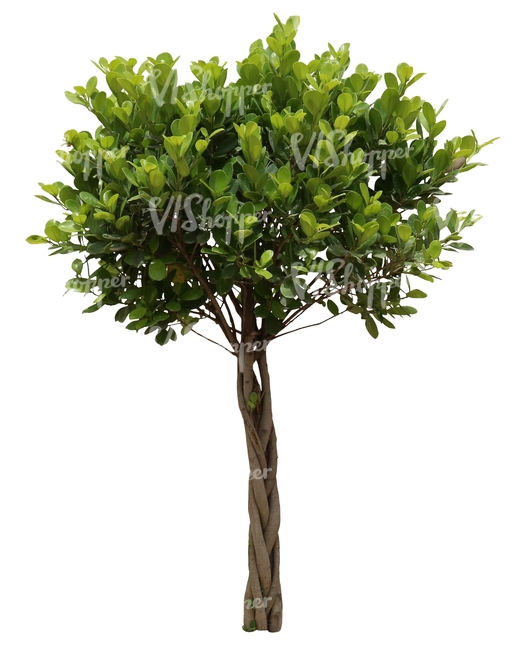 cut out small decorative tropical tree