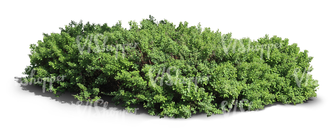 cut out thick shrub
