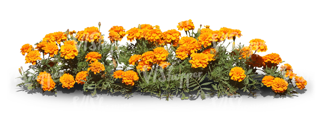 cut out row of orange flowers