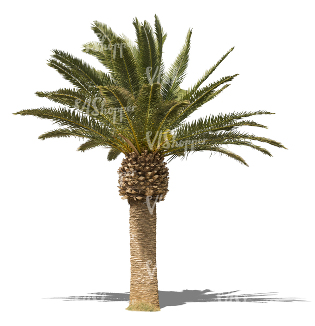 Cut Out Small Palm Tree Cut Out Trees And Plants Vishopper