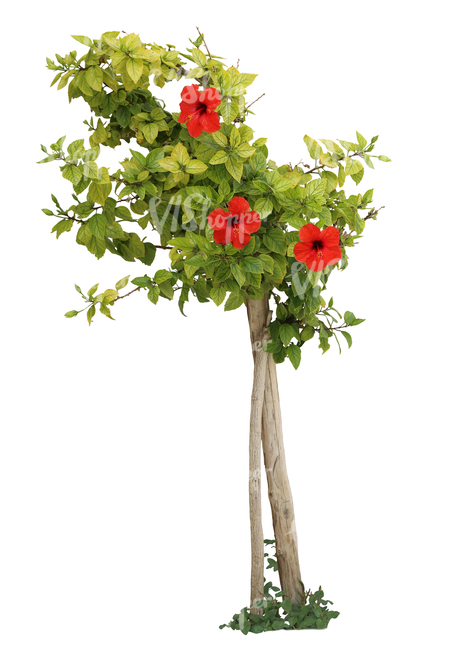 cut out plant with red blossoms