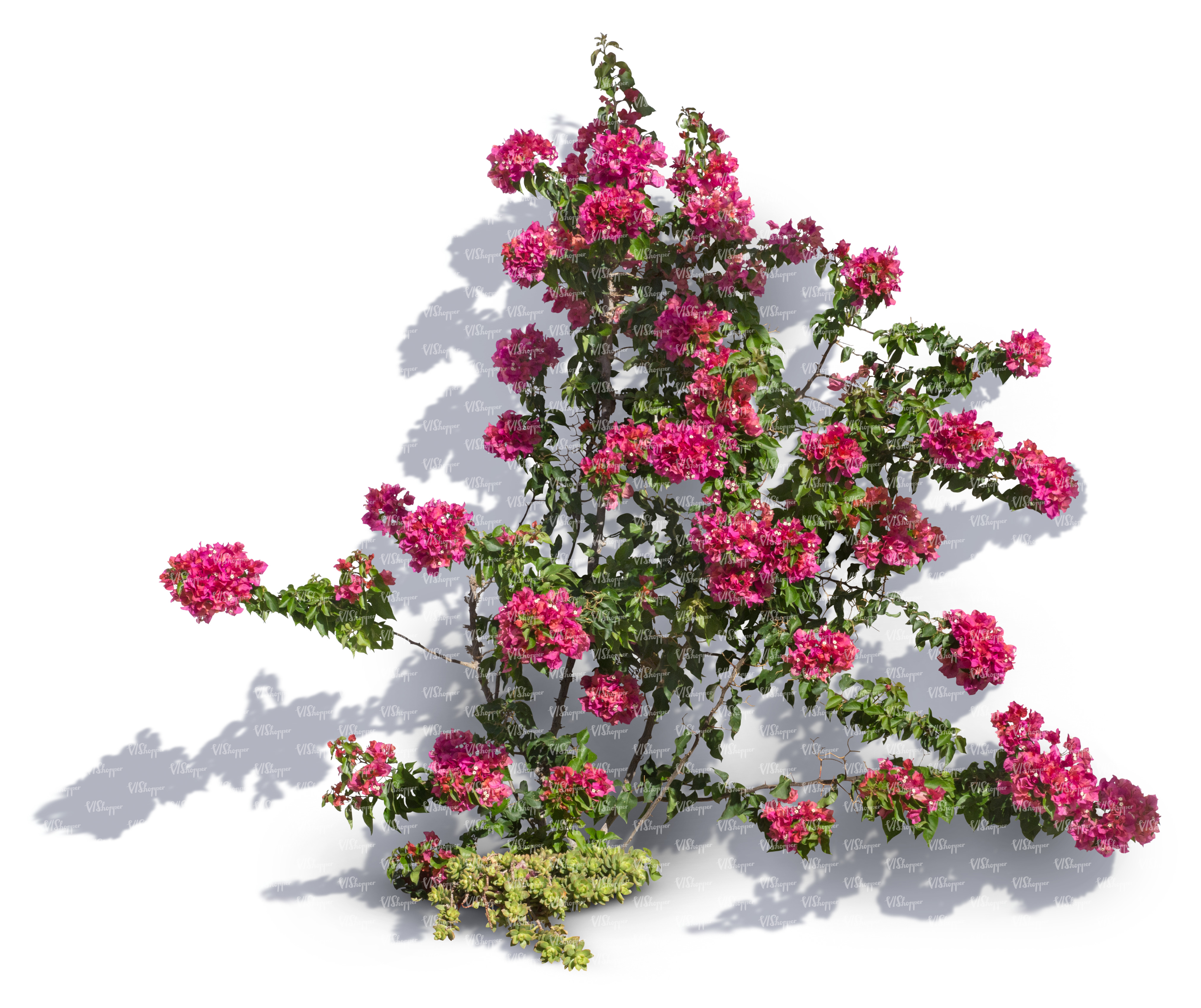 Cut Out Climbing Plant With Pink Blossoms Cut Out Trees And Plants