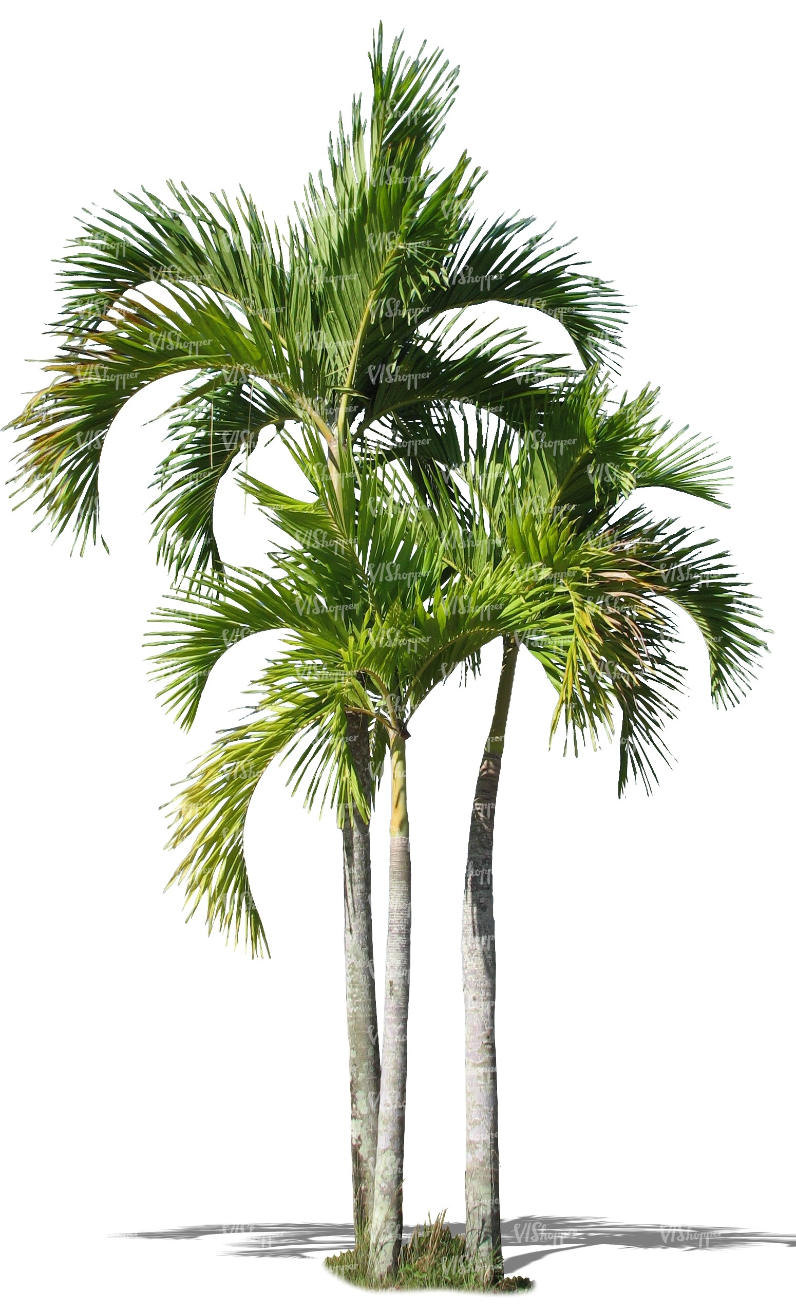 three cut out palm trees cut out trees and plants vishopper