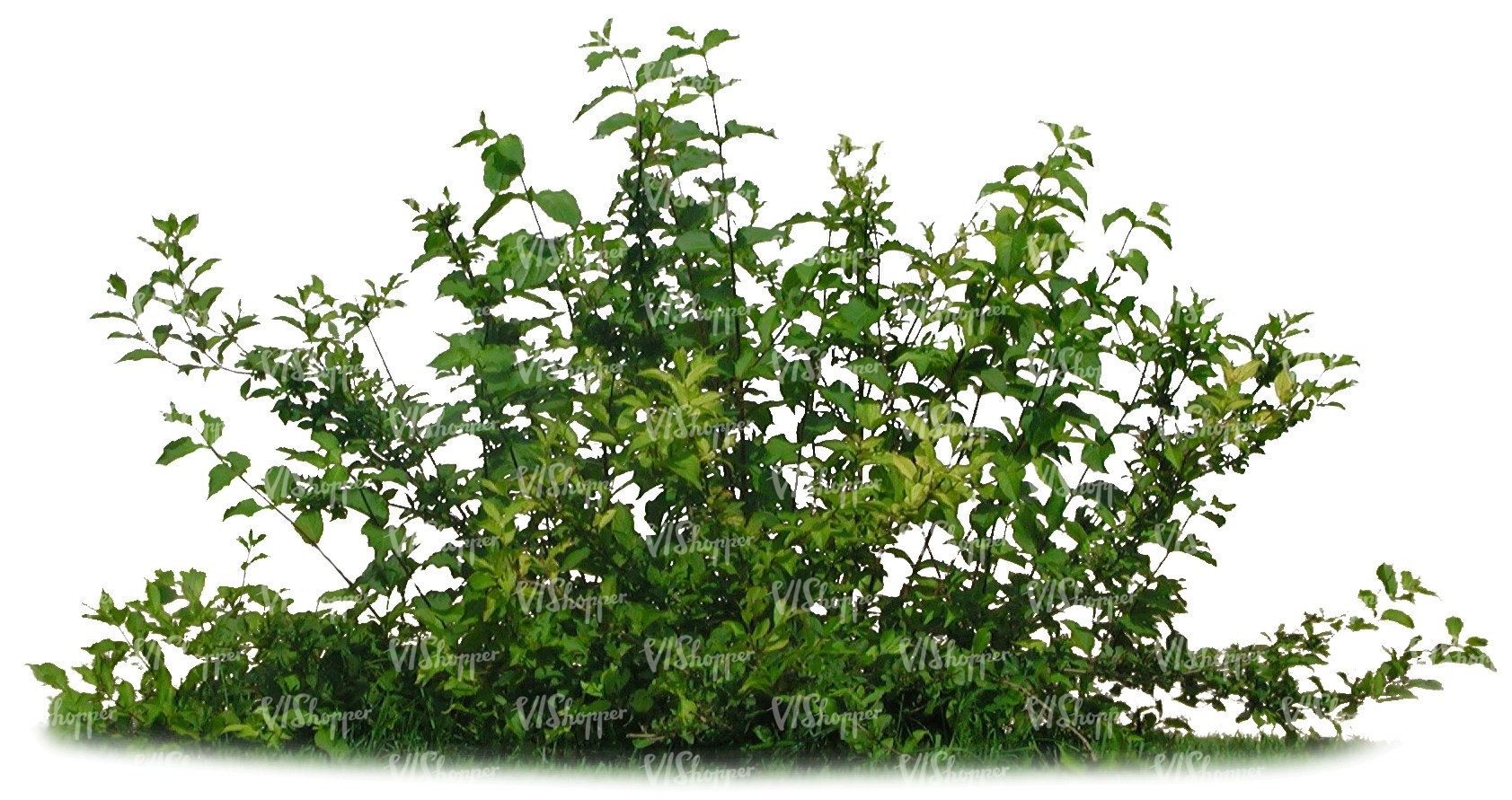 Cut out small bush cut out trees and plants vishopper for Small bushy trees