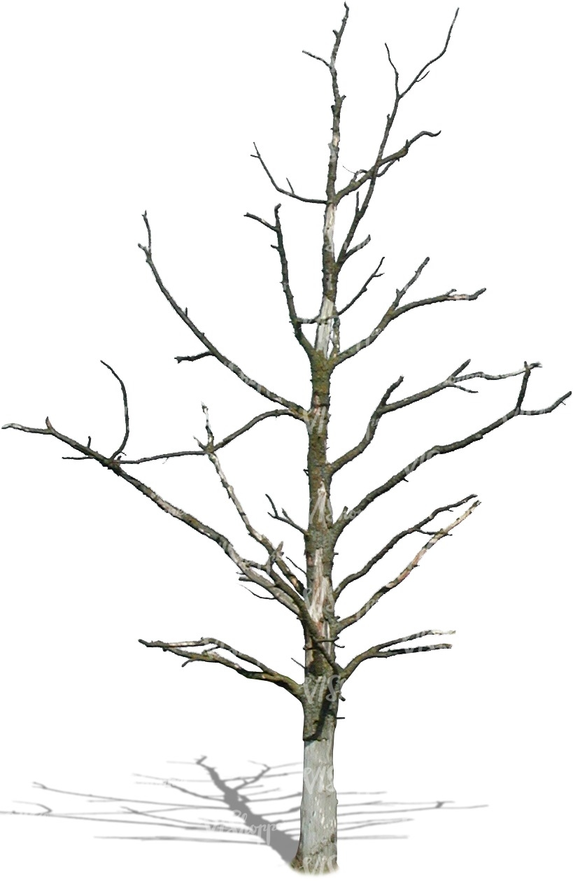 Cut out small leafless tree cut out trees and plants for Small slender trees
