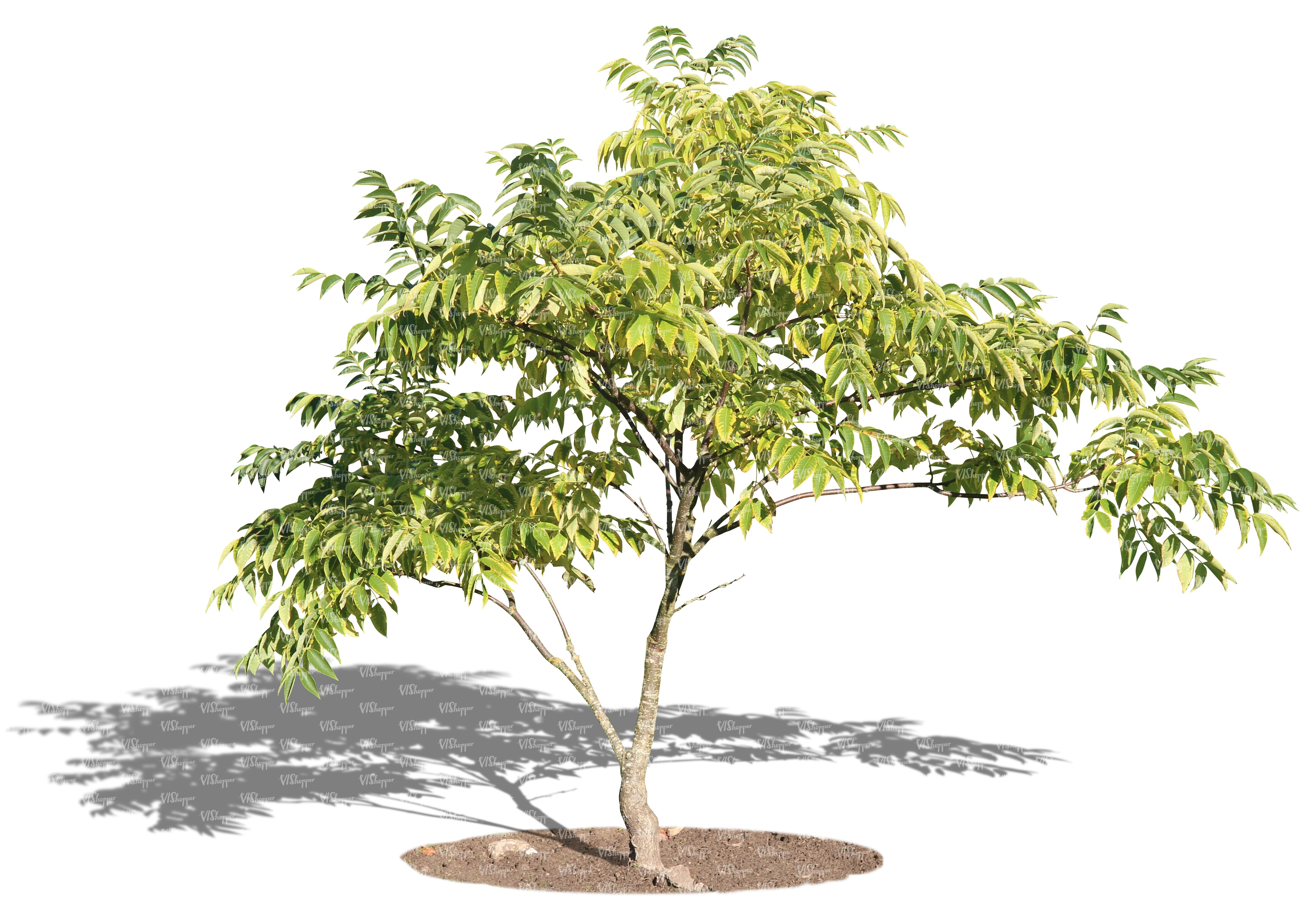 Cut out small tree cut out trees and plants vishopper for Short trees