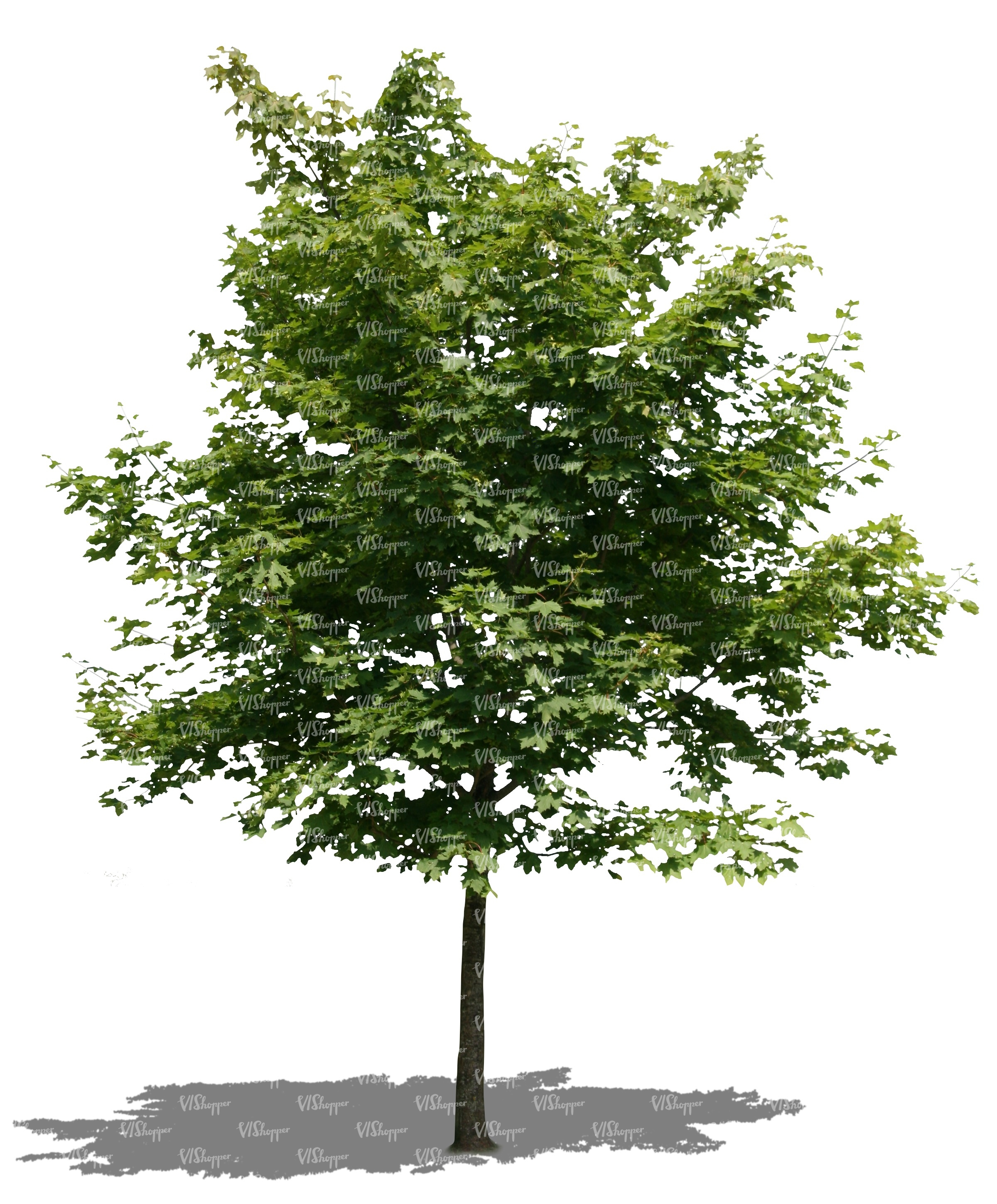 cut out little maple tree cut out trees and plants vishopper