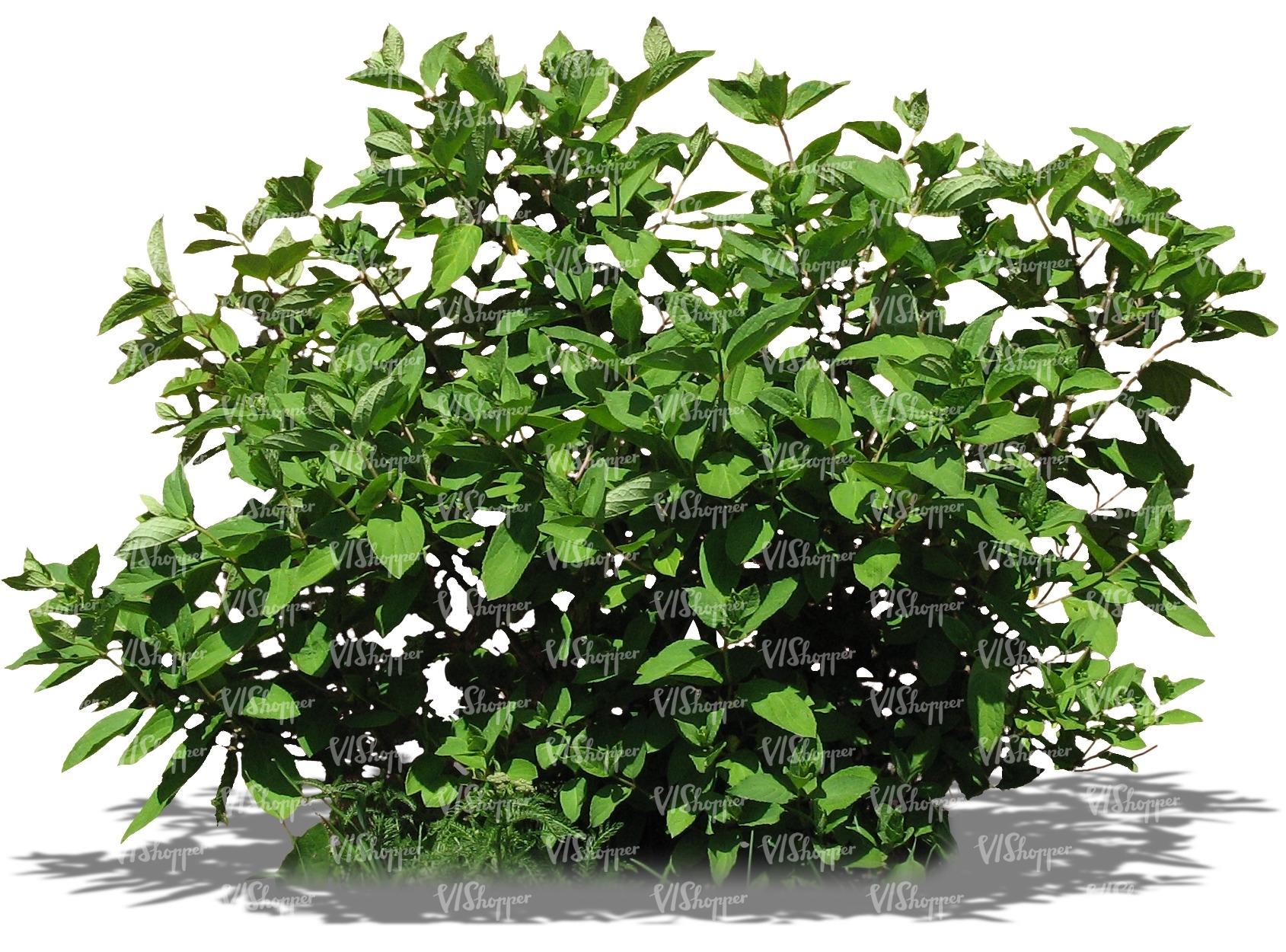 out bush