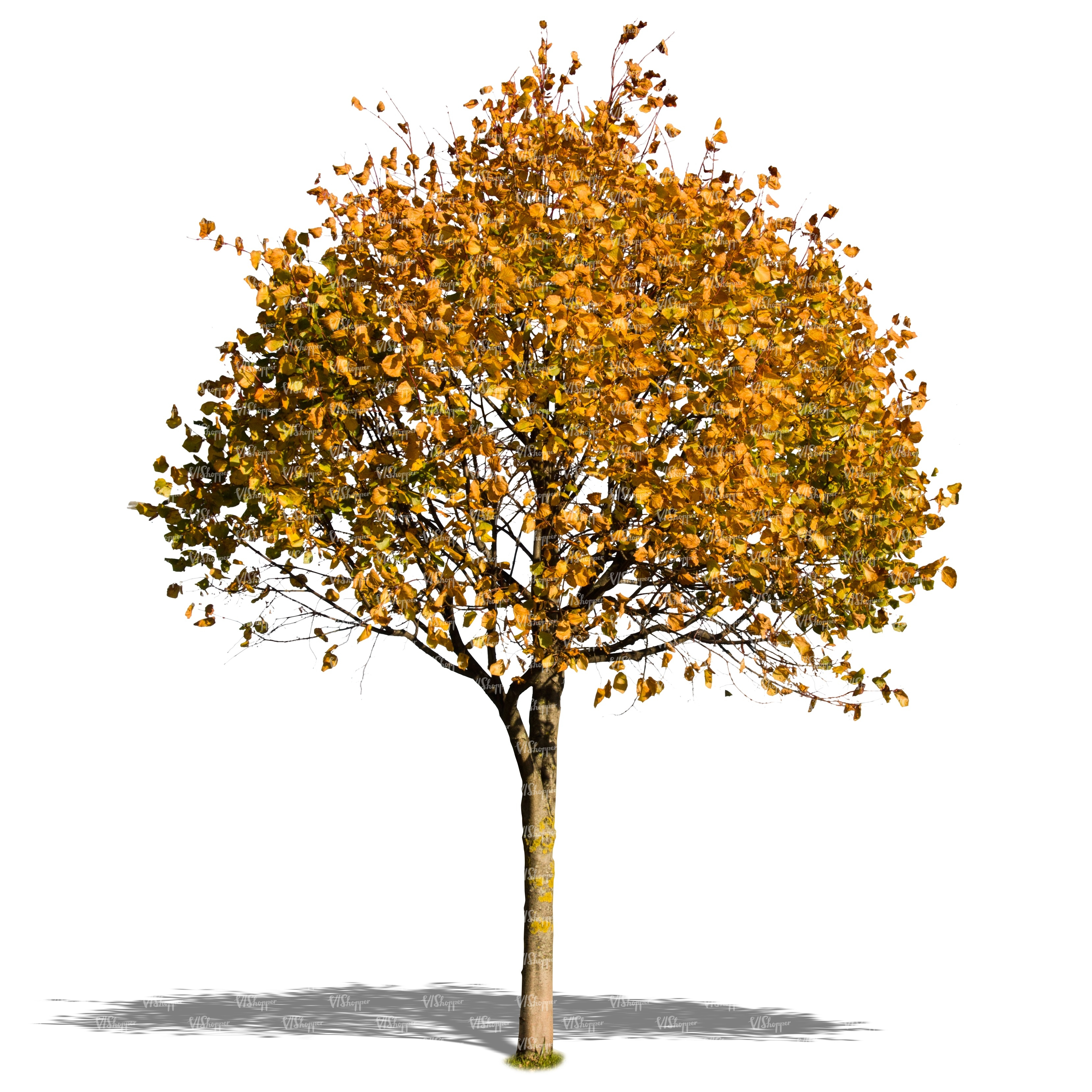 Cut out trees and plants - VIShopper