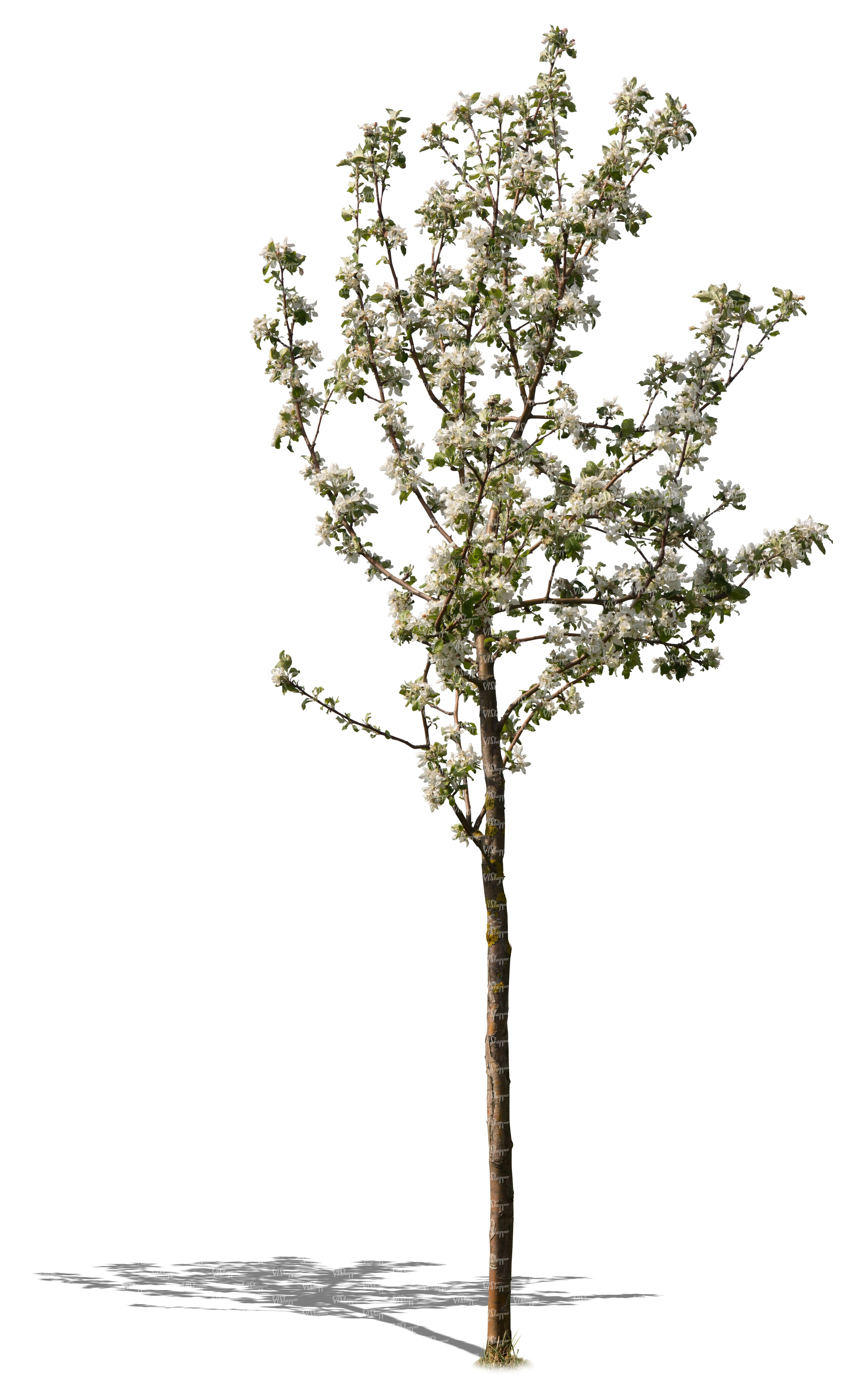 Small tree full of blossoms cut out trees and plants for Short trees