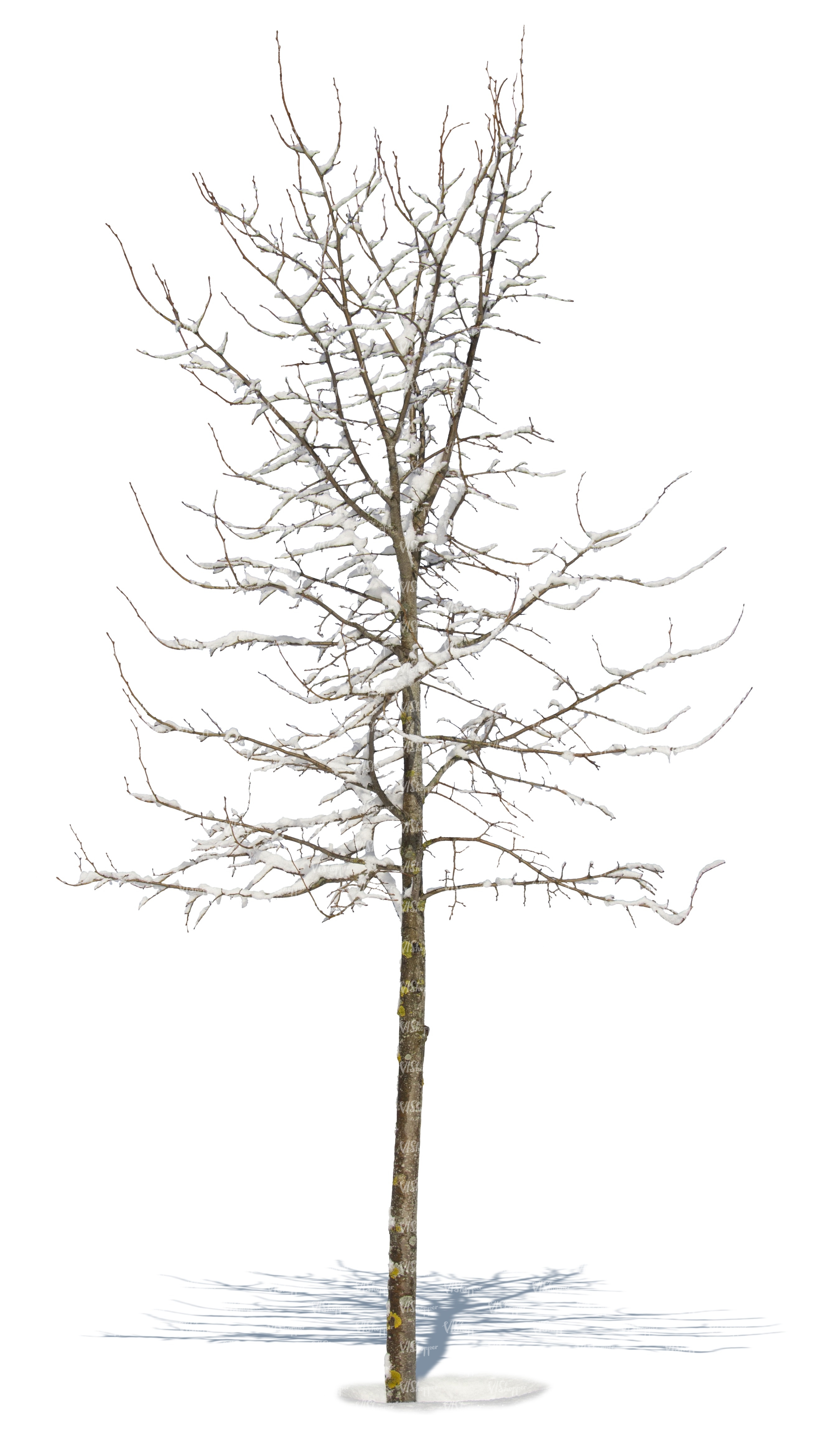 leafless tree covered with snow cut out plants vishopper