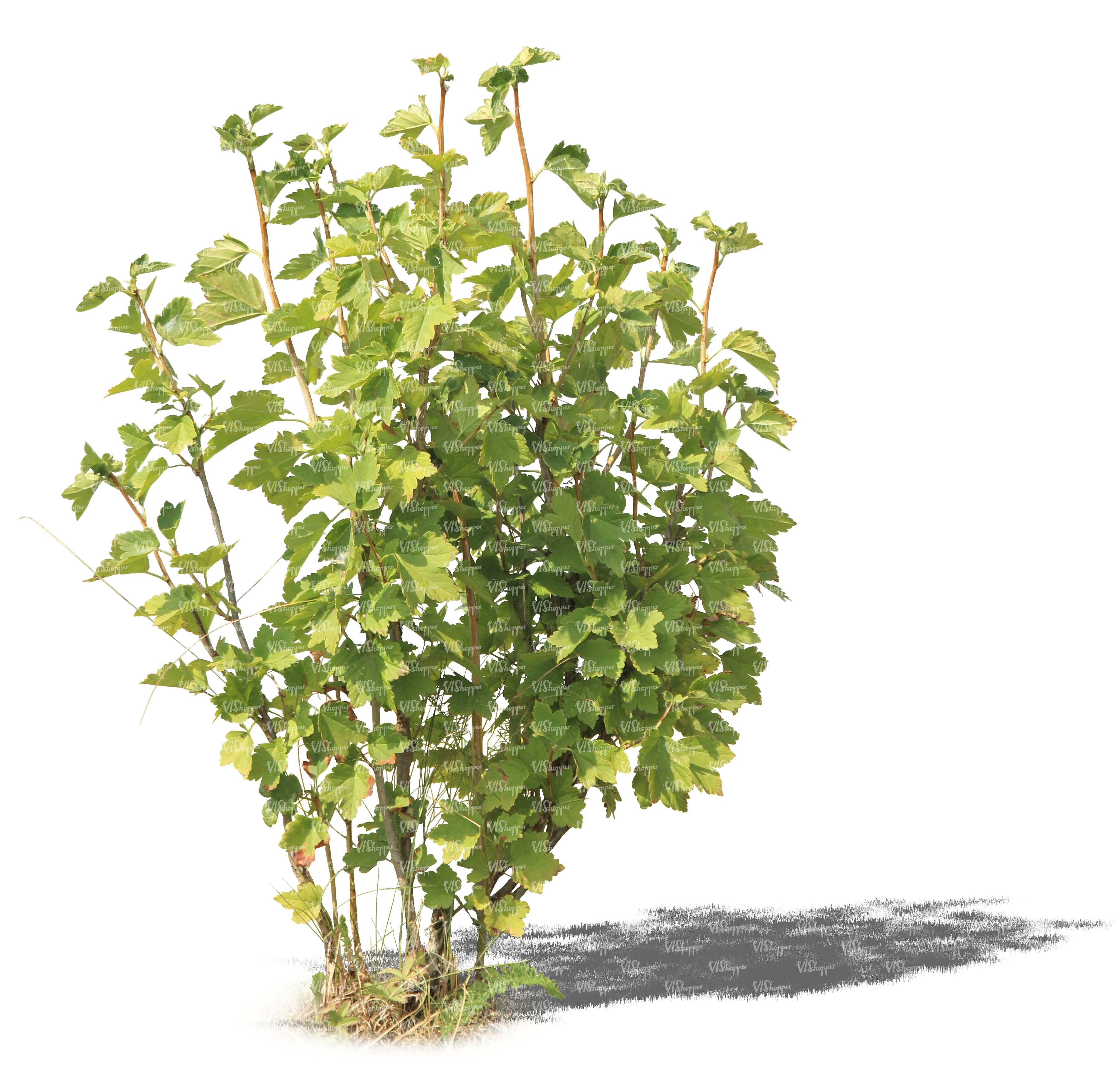 Cut out small regular bush cut out trees and plants for Small bushy trees