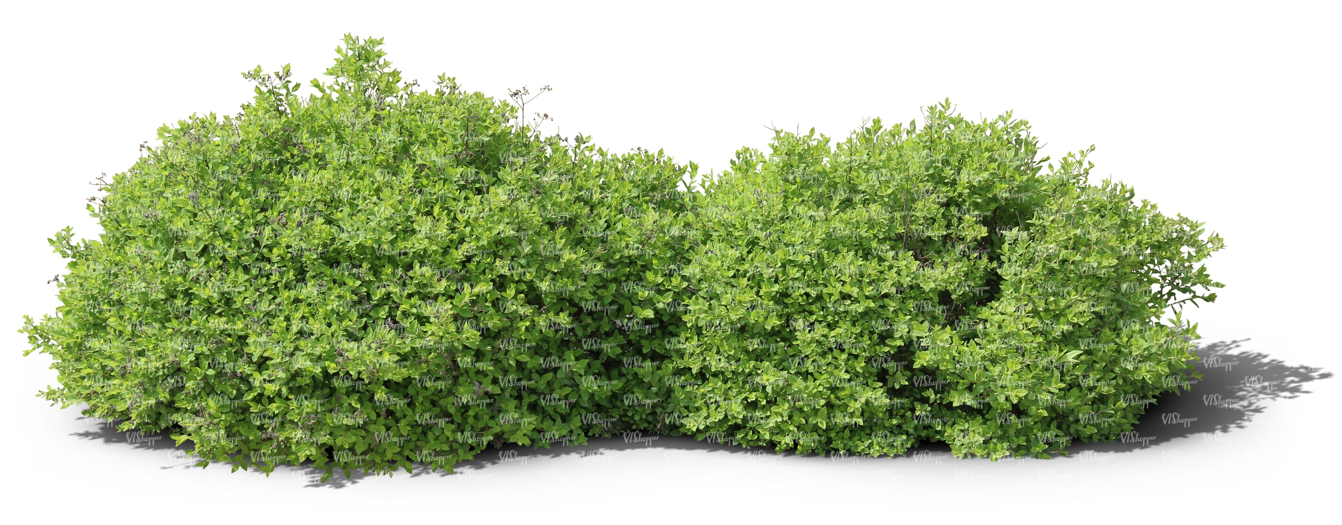Two Cut Out Ordinary Small Bushes Cut Out Trees And