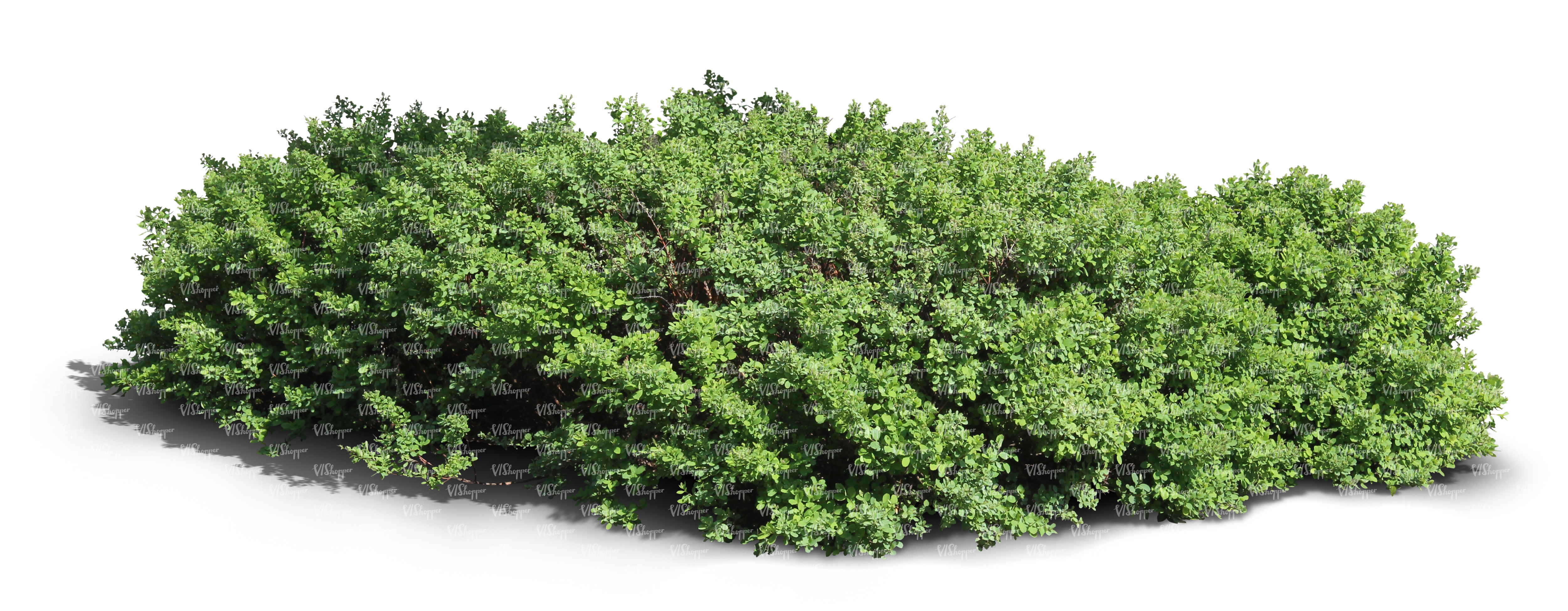 Cut out thick shrub cut out trees and plants vishopper for Plants and shrubs