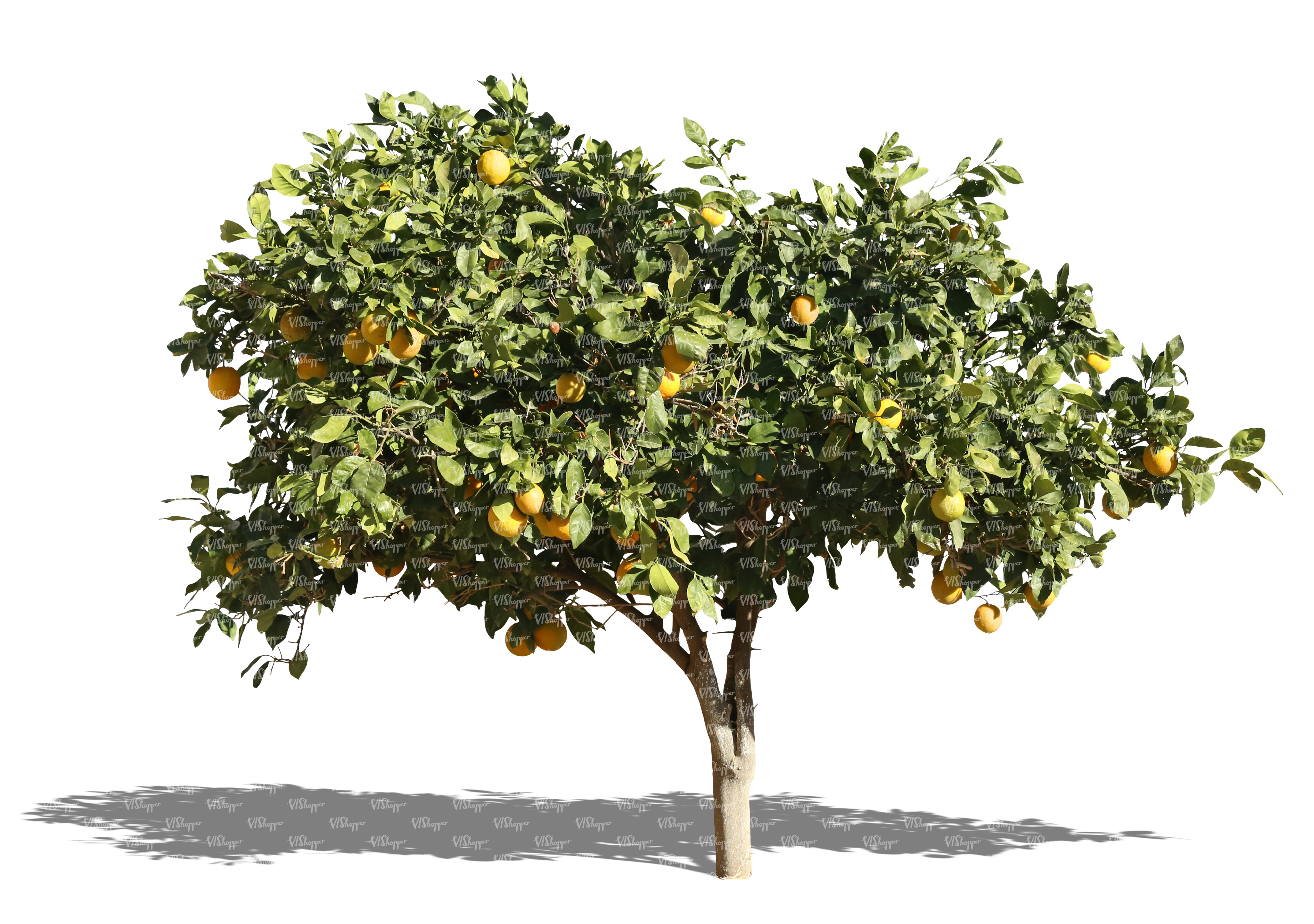 cut out orange tree with fruits cut out trees and plants vishopper